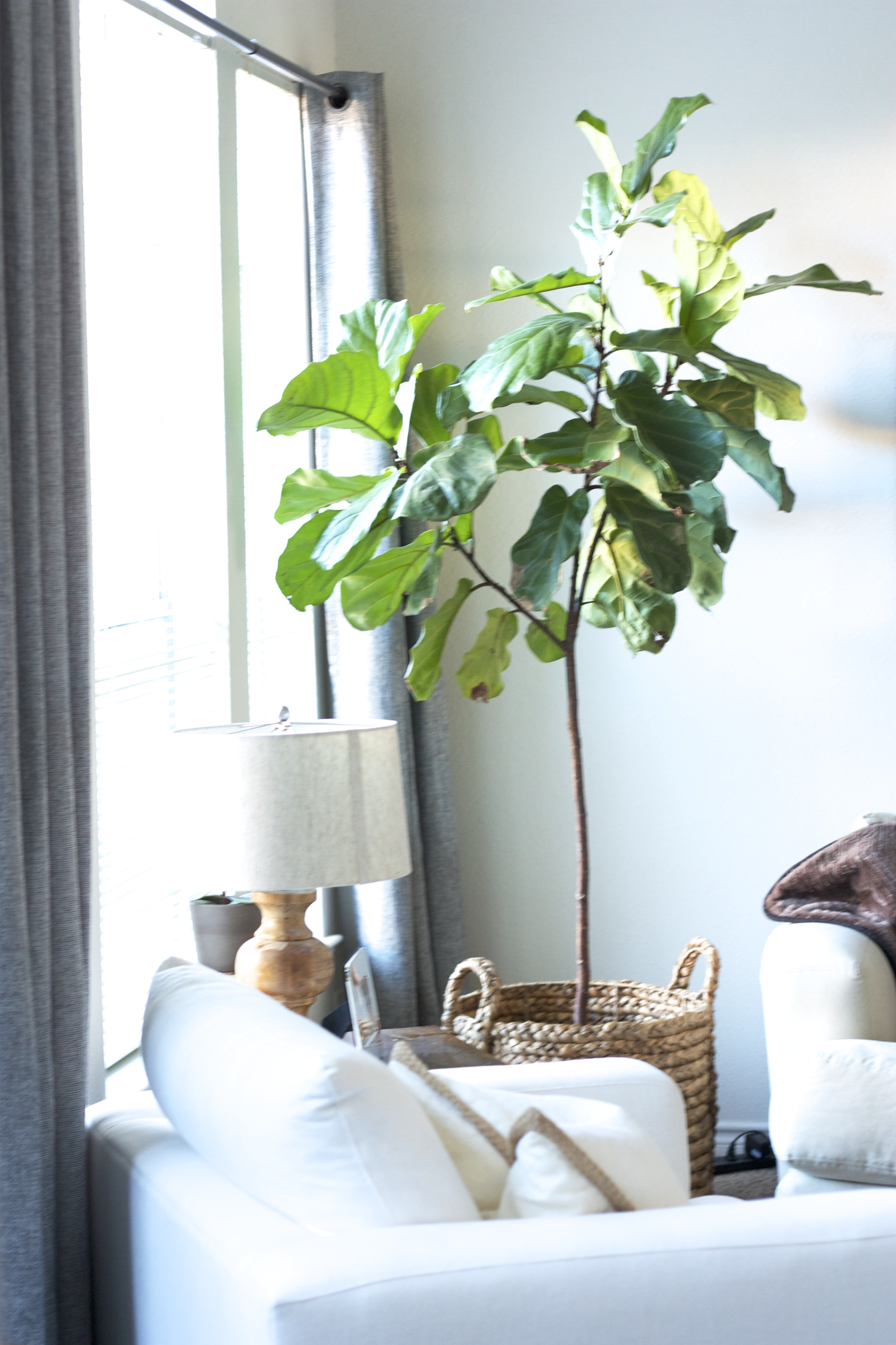 3 indoor plants you probably can t kill sarah linden - Plants you cant kill dont give up ...