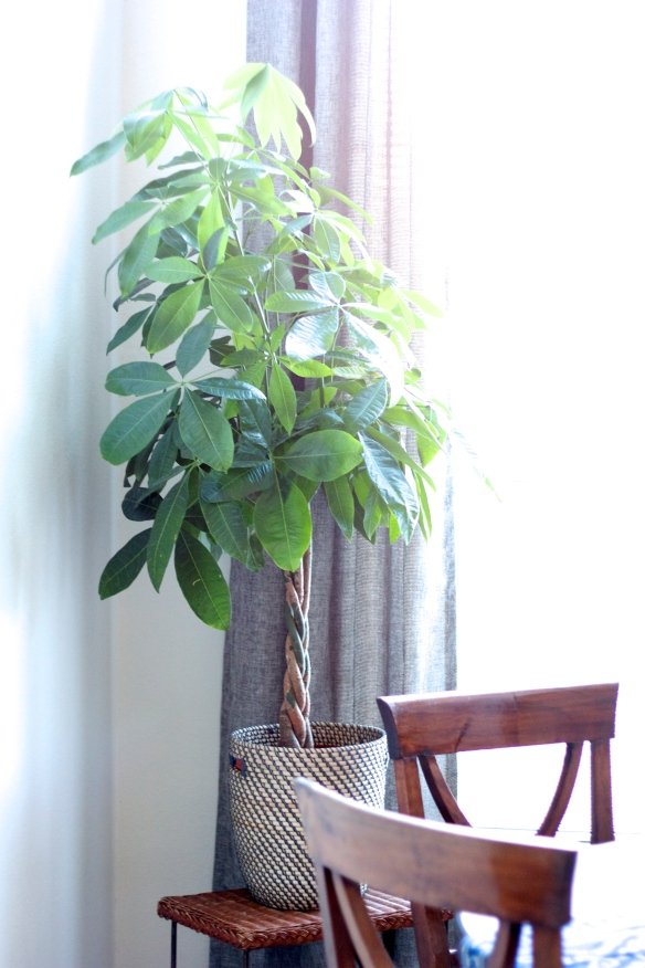 3 Indoor Plants You (Probably) Can't Kill